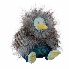 Nedidelis paukščiukas Kivi